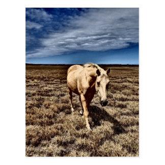 White Horse.JPG Postcard