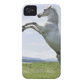 white horse jumping on meadow iPhone 4 cases