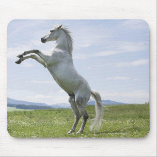 white horse jumping on meadow mouse pad