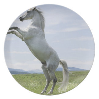 white horse jumping on meadow plate