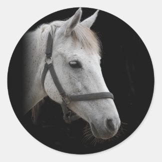 White Horse Portrait on Black Round Sticker