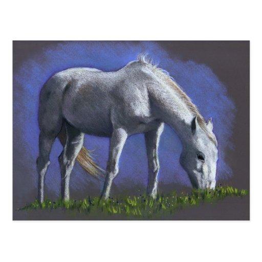 WHITE HORSE: REALISM COLOR PENCIL POSTCARD