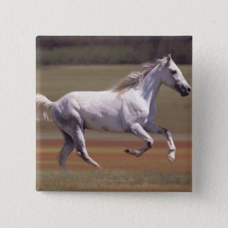 White horse running in field 15 cm square badge