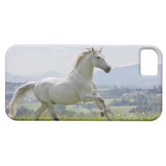 white horse running on meadow case for the iPhone 5