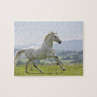 white horse running on meadow jigsaw puzzle
