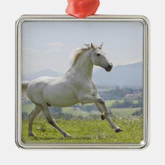 white horse running on meadow Silver-Colored square decoration
