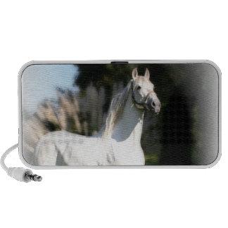 White Horse Speakers