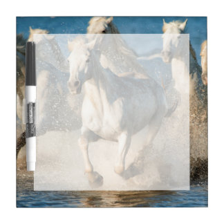 White horses of Camargue, France Dry Erase Board