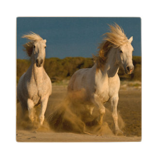 White Horses Running On Beach | Camargue, France Wood Coaster