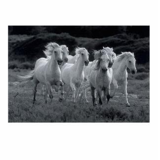 WHITE HORSES STATUE STANDING PHOTO SCULPTURE