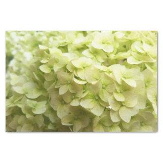 White Hydrangea flower background Tissue Paper