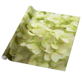 White Hydrangea flower background Wrapping Paper