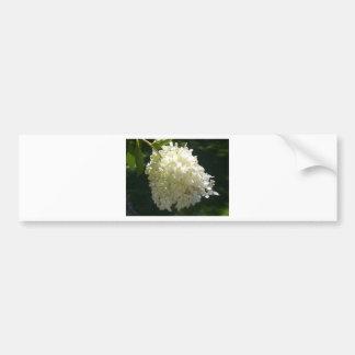 White Hydrangea Flower Cluster Bumper Stickers