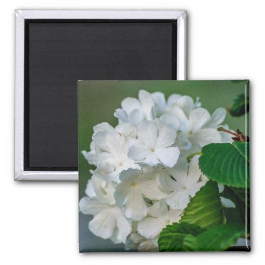 White Hydrangea Magnet