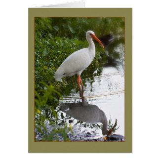 White Ibis at Pond Card