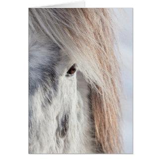 White Icelandic Horse face, Iceland Card