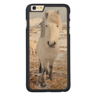 White Icelandic Horse, Iceland Carved® Maple iPhone 6 Plus Case