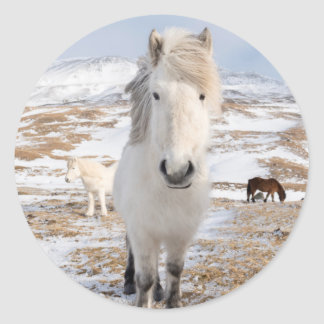 White Icelandic Horse, Iceland Classic Round Sticker