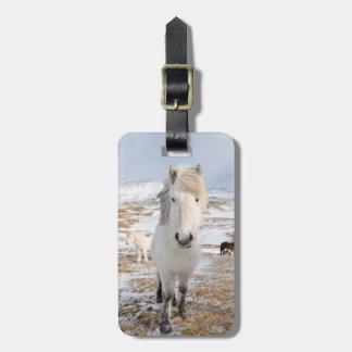 White Icelandic Horse, Iceland Luggage Tag