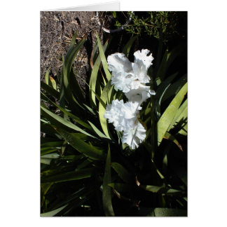 White irises: Thank you for your thoughtfulness Greeting Card