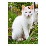 White Kitten Invitation