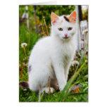 White Kitten Note Card
