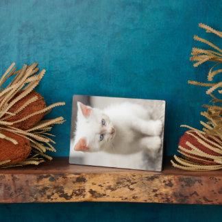 White Kitten Plaque