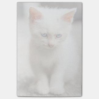 White Kitten Post-it Notes