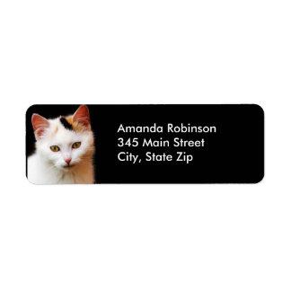 White Kitten Return Address Label