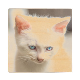 White Kitten Wood Coaster