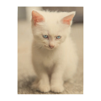 White Kitten Wood Wall Art