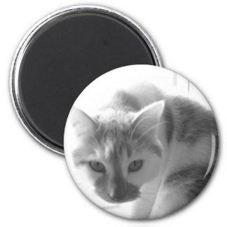 White Kitty Cat Black White Photo Fridge Magnet