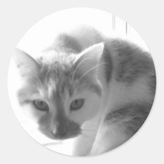 White Kitty Cat Black White Photo Stickers