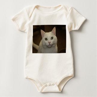 White Kitty Cat Creeper