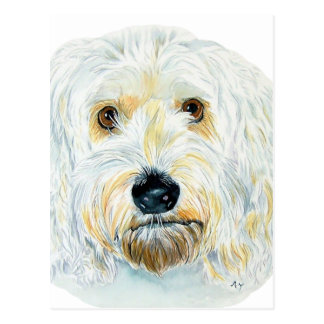 White Labradoodle Maggie Post Cards