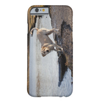 White Labrador near a lake Barely There iPhone 6 Case