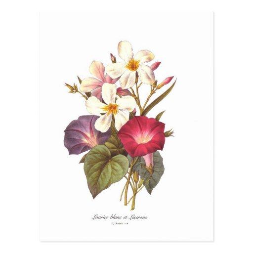 White Laurel and Convolvulus Postcard