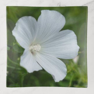White Lavatera Flower Trinket Tray