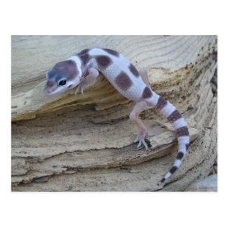 White Leopard Gecko Postcard