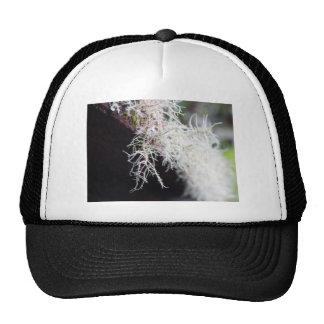 White Lichen Cap