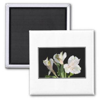 White Lilies. Magnet