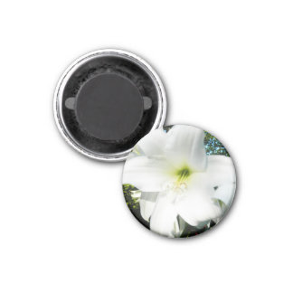 White Lilies Magnet