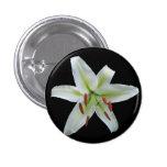 White Lily Button