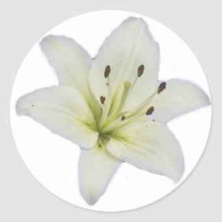 White Lily Classic Round Sticker