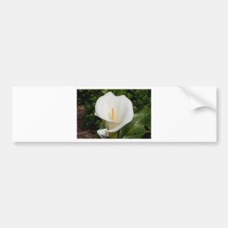 White Lily flower in bloom Bumper Stickers