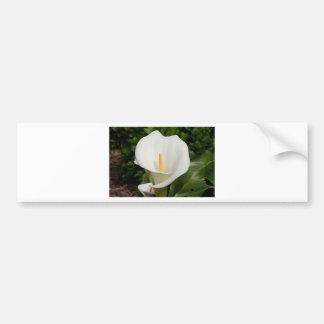 White Lily flower in bloom Bumper Sticker
