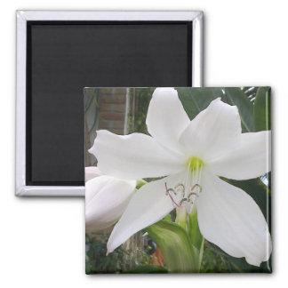 White Lily Flower Square Magnet
