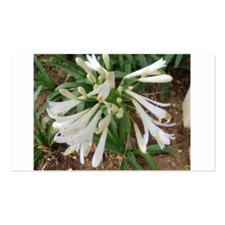 White lily flowers business card templates