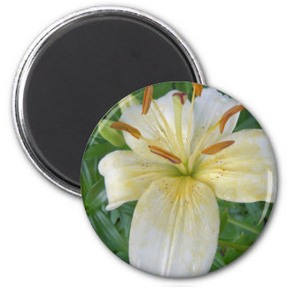 White Lily III 6 Cm Round Magnet