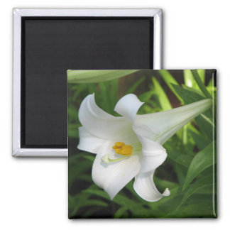 White Lily Magnets
